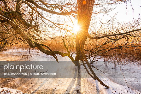 Sunset view of tree at lake - p312m2299695 by Mikael Svensson