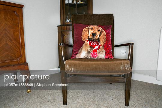 Kissen mit einem Hundeporträt auf altem Stuhl - p1057m1586848 von Stephen Shepherd