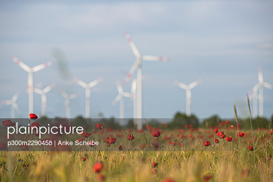 Red poppies blooming in countryside meadow with wind turbines in background - p300m2290458 by Anke Scheibe