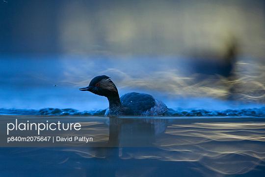 p840m2075647 von David Pattyn