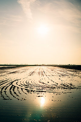 Spain, Catalonia, Deltebre, Field with rice plants and flooded with water - p300m2058798 von Gemma Ferrando