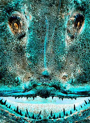 Raubfisch - Tier  - p4900114 von Arne Pastoor