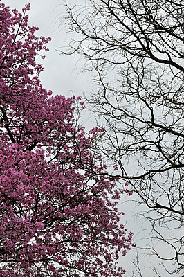 Almond tree - p8760237 by ganguin