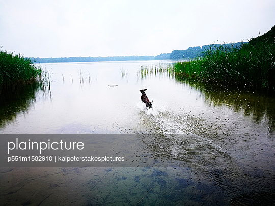 Dog playing at the lake - p551m1582910 by Kai Peters