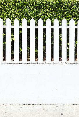 Zaun vor einer Hecke - p045m854409 von Jasmin Sander