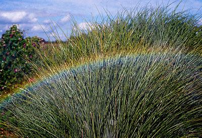 Regenbogen im Gras - p1169m2016025 von Tytia Habing