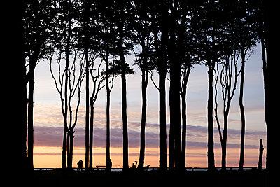Buchenwald an der Ostsee Küste - p1600m2230780 von Ole Spata