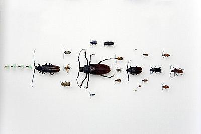 Bugs - p3270212 by René Reichelt