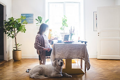 Dog sitting by woman having breakfast at table while working from home - p426m2046372 by Maskot