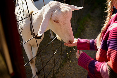Midsection of girl feeding goat - p1166m1182941 by Cavan Images