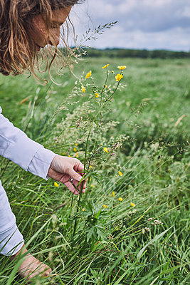 Woman cutting wild flowers on a meadow - p1573m2289118 by Christian Bendel