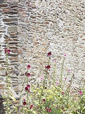 Mauerblümchen - p606m1091522 von Iris Friedrich