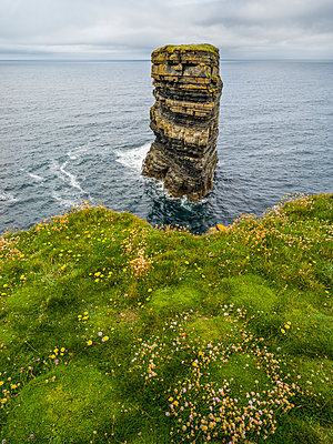 Sea Stack in the water and wildflowers on the grass above, Downpatrick Head, Wild Atlantic Way; Killala, County Mayo, Ireland - p442m2039480 by Keith Levit