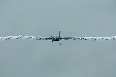 Frost covered barbed wire - p6241740f by Odilon Dimier