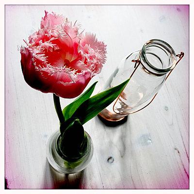 Tulpe und Windlicht - p979m1220430 von Ulrike Schacht