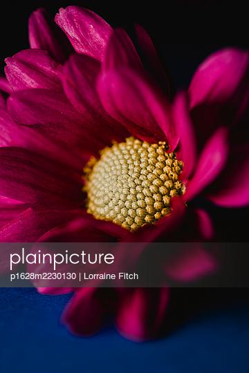 Purple flower - p1628m2230130 by Lorraine Fitch