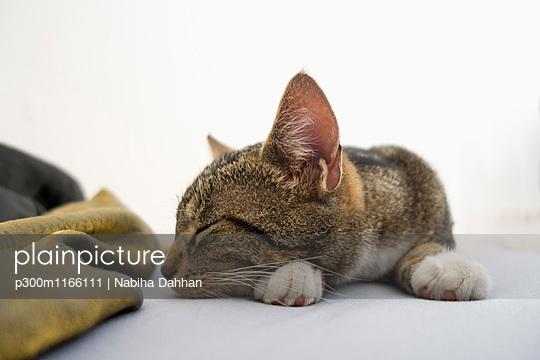 p300m1166111 von Nabiha Dahhan