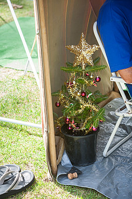 Christmas tree - p1261m1124638 by tromp l'oeil