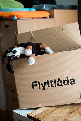 Stuffed toy in cardboard box - p312m1570751 by Rebecca Wallin