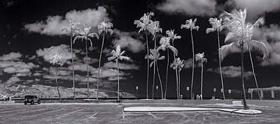 Infrared Photo Of Tall Palm Trees At Haleiwa Beach Park - p343m1218011 by Sean Davey