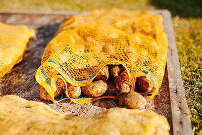 Potatoes in sack - p312m2161995 by Matilda Holmqvist