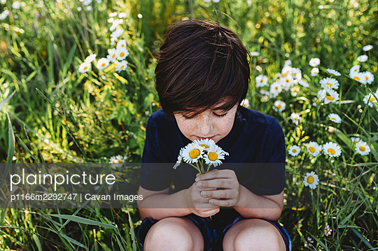Young boy smelling a bouquet of daisies in a field of flowers. - p1166m2292747 by Cavan Images