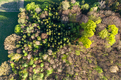 Aerial view of trees growing in forest, Dietramszell, Germany - p300m2144015 by Hans Lippert