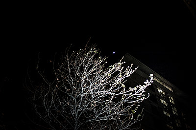 Tree in the night - p1007m1134149 by Tilby Vattard