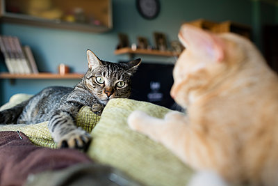 Two cats resting on the top of a couch - p300m1081506f by Ramon Espelt