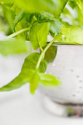 Close up of leaf vegetable or herb - p312m1551896 by Johner Images