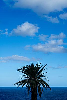Palm tree - p427m2110314 by Ralf Mohr