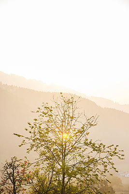 Tree at first light - p879m2111204 by nico
