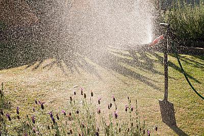 Garten wässern - p1201m1039911 von Paul Abbitt