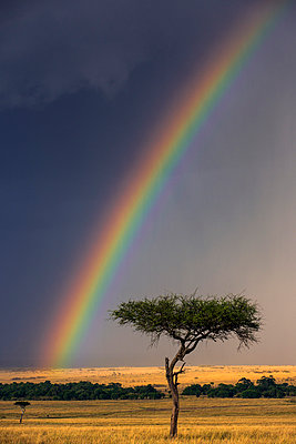 Kenya, Masai Mara, Narok County. A brilliant rainbow in Masai Mara National Reserve. - p652m941642 by Nigel Pavitt