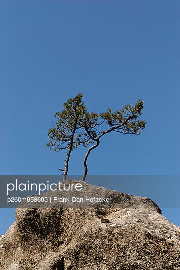 Two resiliant trees - p260m859683 by Frank Dan Hofacker