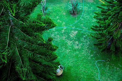 Garden hose in the garden - p1484m2217602 by Céline Nieszawer