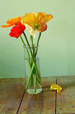 Poppies in a vase - p4730145f by Stock4B