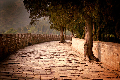 Tree-lined cobblestone path - p555m1304963 by Christopher Winton-Stahle