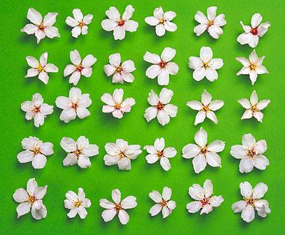 Mandelblüten - p8850161 von Oliver Brenneisen
