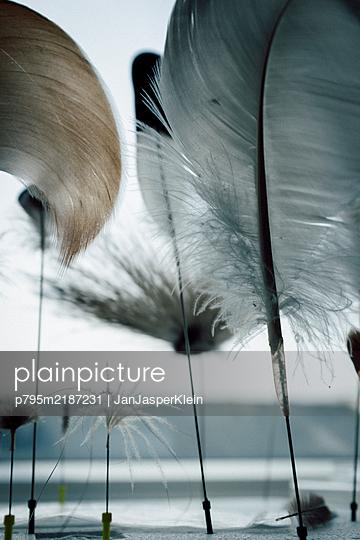 Feather - p795m2187231 by JanJasperKlein