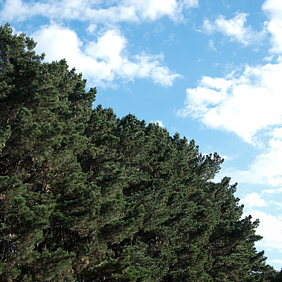 Bäume und Himmel - p1128m947576 von Chau Cuong Lê