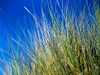 Marram grass - p885m890724 by Oliver Brenneisen