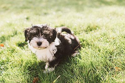 Puppy - p1507m2022504 by Emma Grann