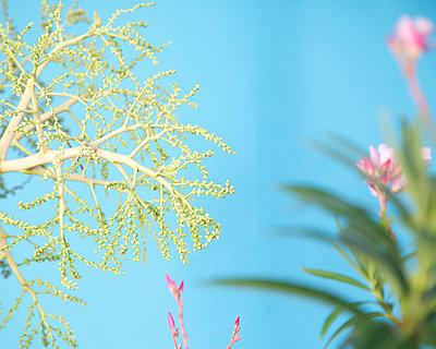 Caribbean spring - p606m885542 by Iris Friedrich