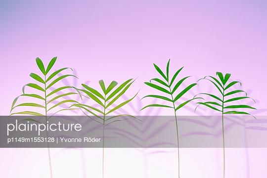 Palm fronds, Chamaedorea elegans - p1149m1553128 by Yvonne Röder
