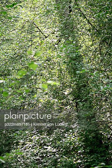 Laubwald - p322m697181 von Kimmo von Lüders
