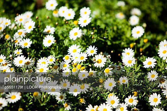 Flower Bed of White Flowers