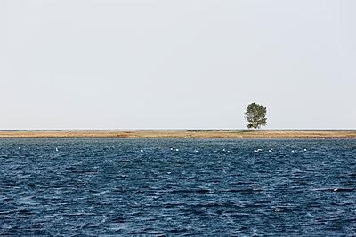 Schwäne in einer Bucht - p248m949467 von BY
