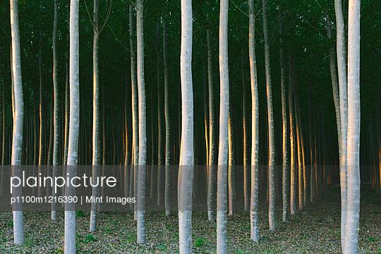 p1100m1216390 von Mint Images