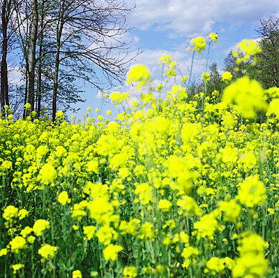 Spring - p1231m2043347 by Iris Loonen